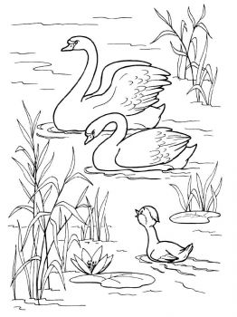 Swans-birds-coloring-pages-1