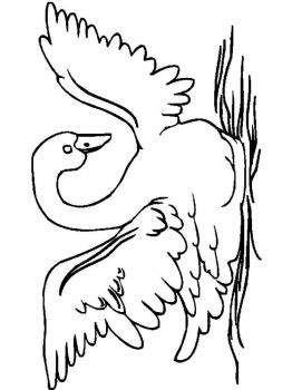 Swans-birds-coloring-pages-11