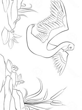 Swans-birds-coloring-pages-5