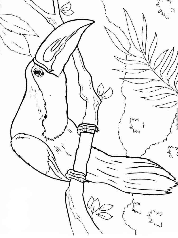 ausmalbilder tukan  malvorlagen kostenlos zum ausdrucken