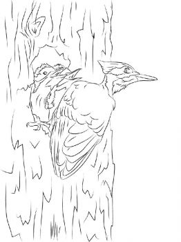 Woodpeckers-birds-coloring-pages-12