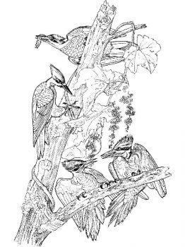 Woodpeckers-birds-coloring-pages-15