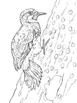 Woodpeckers-birds-coloring-pages-3