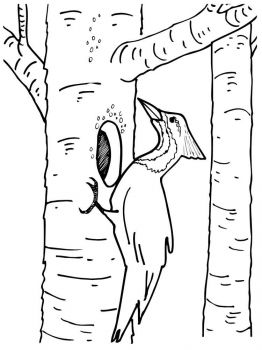 Woodpeckers-birds-coloring-pages-5