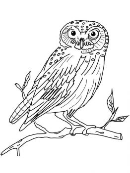 coloring-pages-animals-owl-16