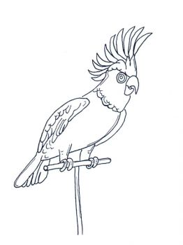 coloring-pages-animals-parrot-10