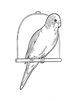 coloring-pages-animals-parrot-12