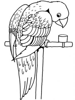 coloring-pages-animals-parrot-15