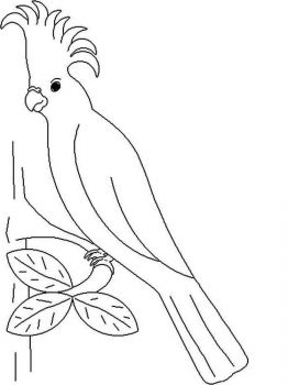 coloring-pages-animals-parrot-6