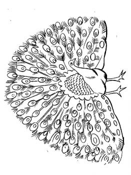 coloring-pages-animals-peacock-13