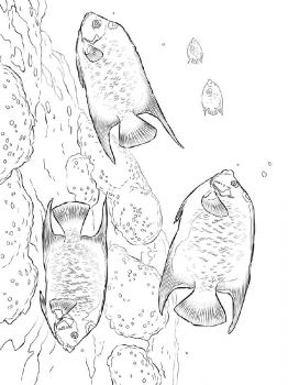 Angelfish-coloring pages-11