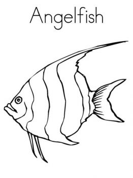 Angelfish-coloring pages-2