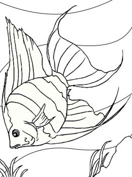 Angelfish-coloring pages-3