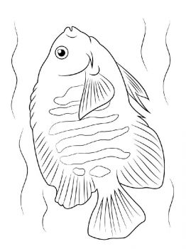 Angelfish-coloring pages-9