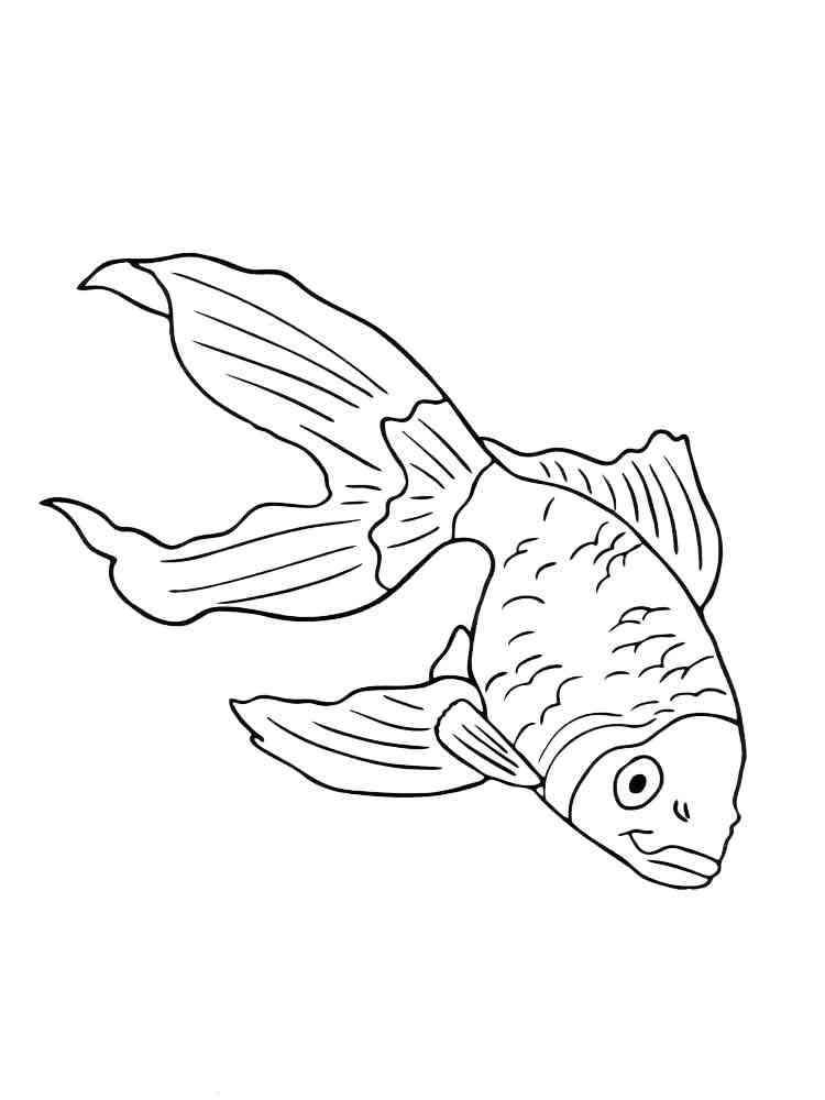 malvorlagen aquarium fische  ausmalbilder kostenlos zum