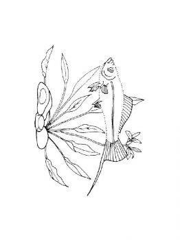 Aquarium-Fish-coloring-pages-3