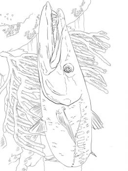 Barracudas-coloring pages-2