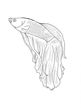 Betta-fish-coloring pages-4