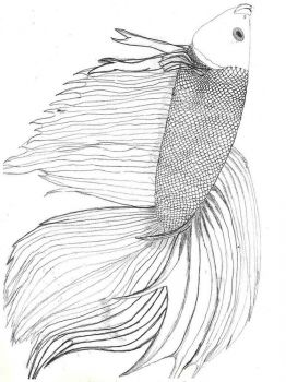 Betta-fish-coloring pages-5
