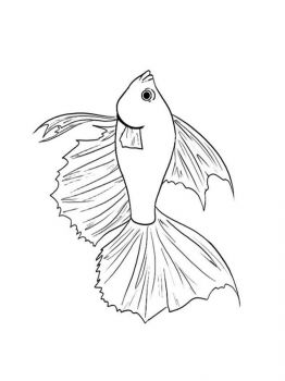 Betta-fish-coloring pages-7