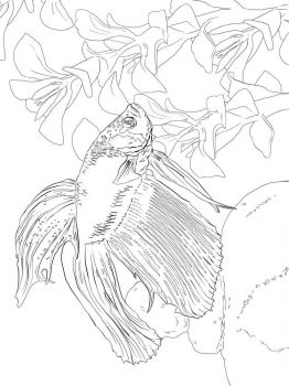 Betta-fish-coloring pages-8