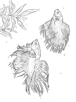 Betta-fish-coloring pages-9