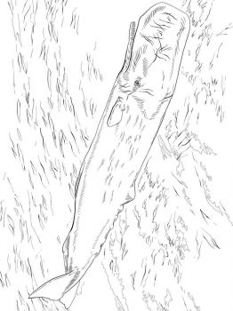 Cachalot-coloring-pages-8