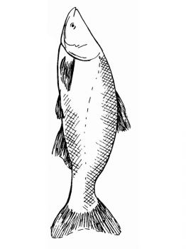 Carp-coloring pages-10
