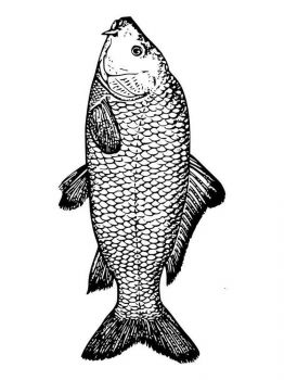 Carp-coloring pages-3