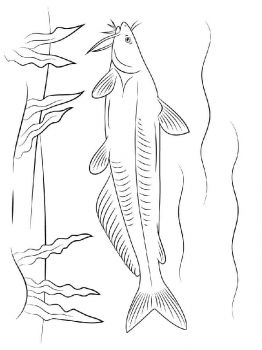 Catfish-coloring pages-1