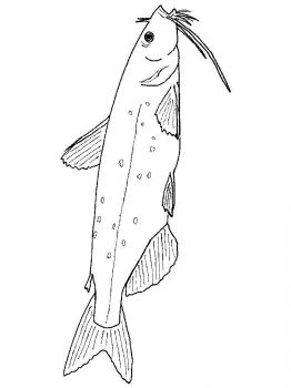 Catfish-coloring pages-17