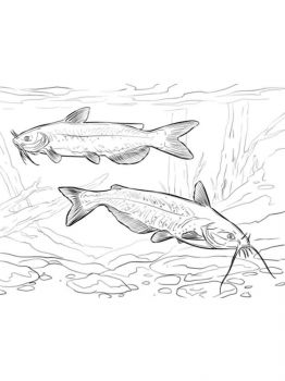 Catfish-coloring pages-4