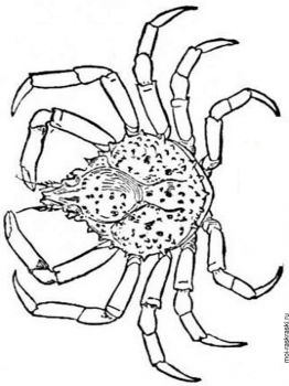 Crabs-coloring-pages-12