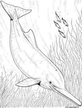 Dolphin-coloring-pages-10