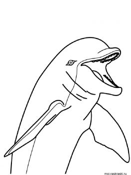 Dolphin-coloring-pages-7