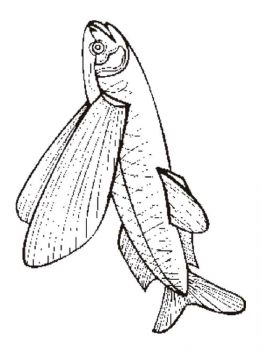 Flying-fish-coloring pages-8