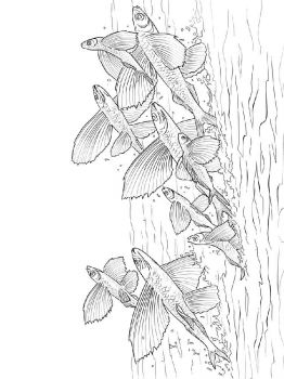 Flying-fish-coloring pages-9