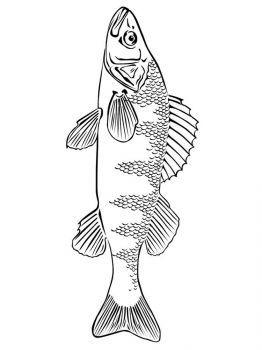 Freshwater-Fish-coloring-pages-11