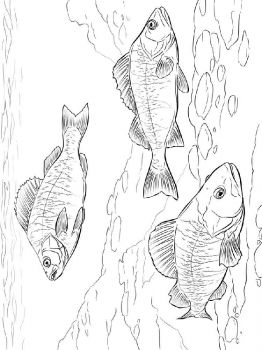 Freshwater-Fish-coloring-pages-3