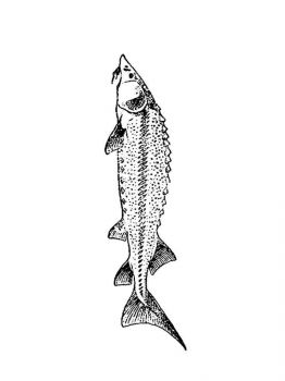 Freshwater-Fish-coloring-pages-8