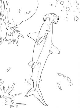 Hammerhead-Shark-coloring-pages-3