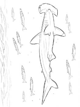 Hammerhead-Shark-coloring-pages-5