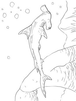 Hammerhead-Shark-coloring-pages-7