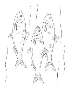 Herring-coloring pages-7
