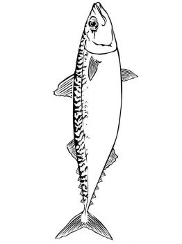 Mackerels-coloring pages-1