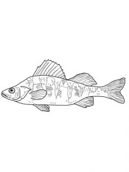 Perch-coloring pages-2