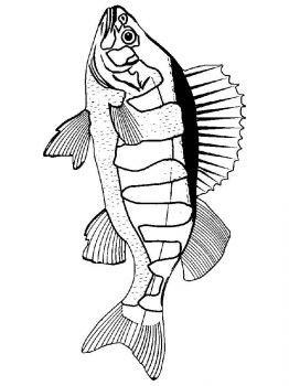 Perch-coloring pages-6