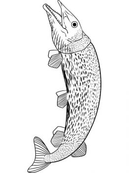 Pike-coloring pages-2