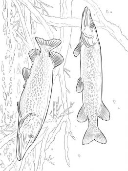 Pike-coloring pages-8