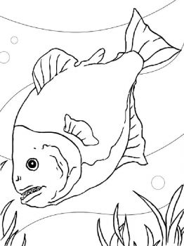 Piranhas-coloring pages-6